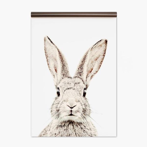 Papel Pintado magnético Rabbit