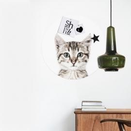 Vinilo magnético Cat